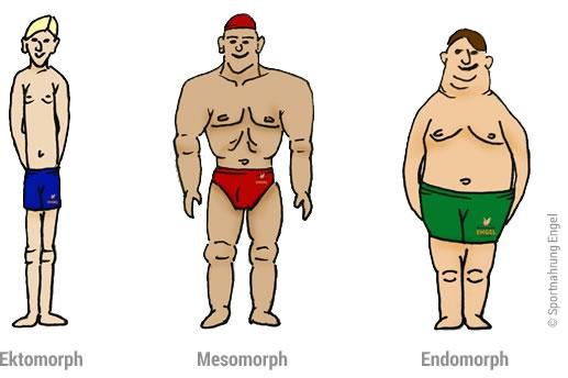Hardgainer, Softgainer und Mesomorph sind 3 Körpertypen im Bodybuilding