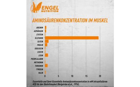 engel-nutrition-glutamin-aminosaeurenbilanz-im-muskel