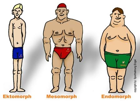 Körpertypen-Diät für mehr Erfolg beim Fettabbau