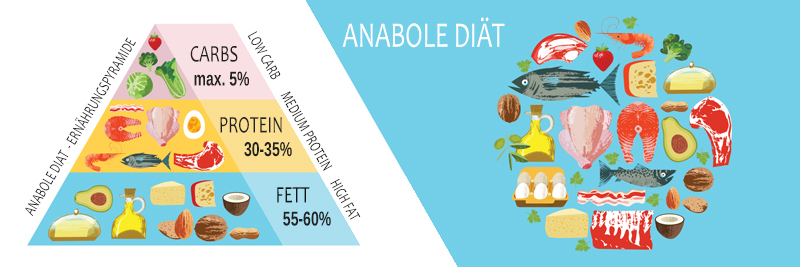Anabole Diät welche Lebensmittel werden gegessen die Ernährungspyramide