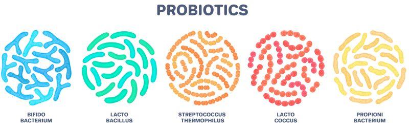 Probiotica die bekanntesten Bakterienstämme