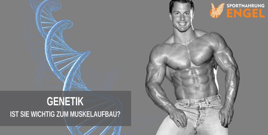 Titelbild Genetik wichtig für den Muskelaufbau?