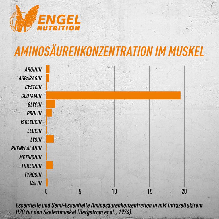 Aminosäurenkonzentration in der Skeletmuskulatur LG