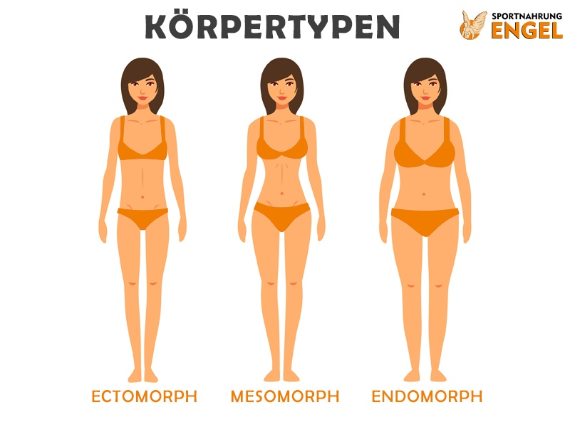 Frauen Körpertypen Ektomorph, Mesomorph und Endomorph