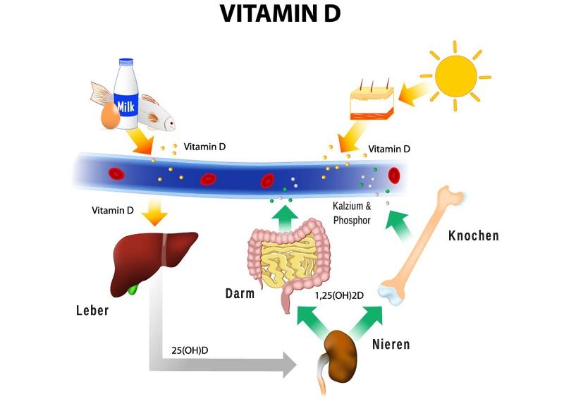Aufnahme Vitamin D im Körper