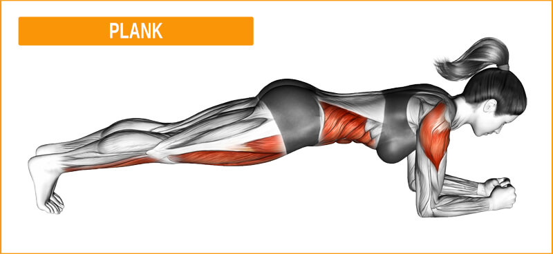 Tiefenmuskulatur mit der Übung Plank trainieren
