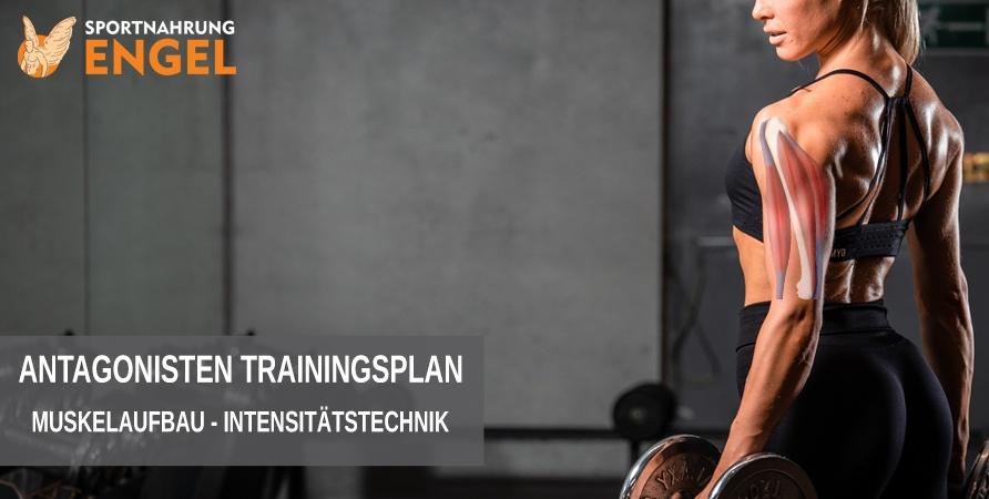 Antagonisten Trainingstechnik für mehr Muskelaufbau