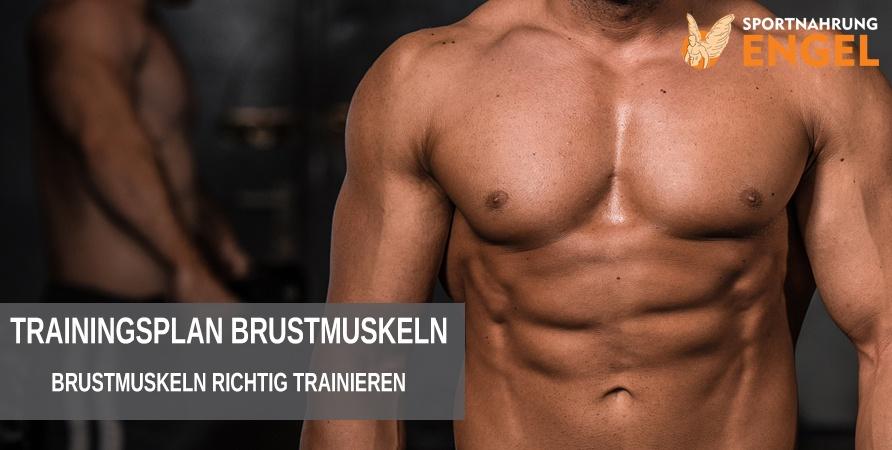 Trainingsplan Brustmuskelaufbau - Brustmuskeln richtig trainieren