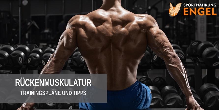 Rücken aufbauen mit unseren Trainingsplänen
