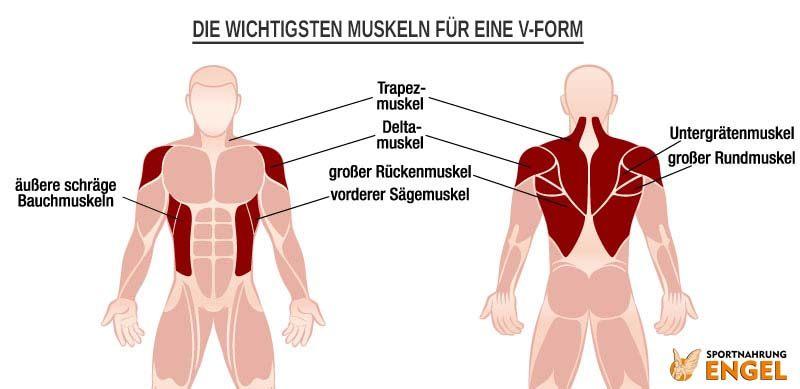 Diese Muskeln musst Du für eine schöne V-Form trainieren